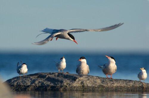 Массовые миграции в дикой природе: увлекательный