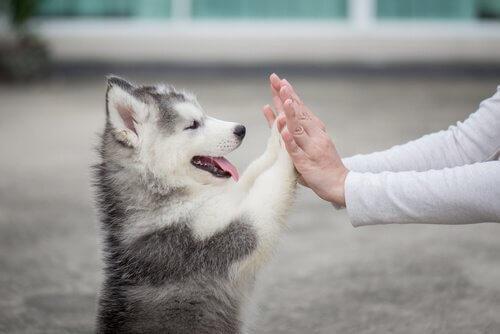Психология собаки: все, что вам нужно знать