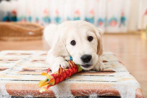 Притяжательное поведение у собак