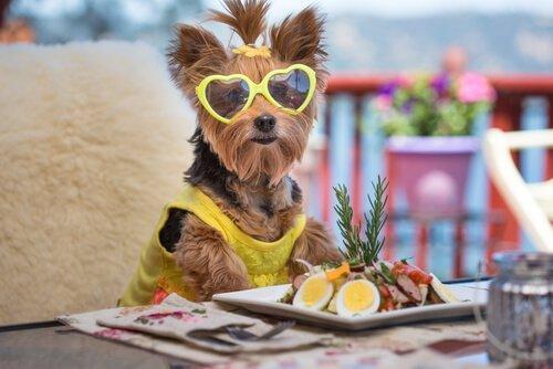 Собачьи салаты: 6 различных рецептов