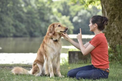 Как воспитать собаку, если она глухая?