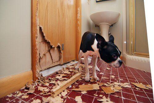 Социализация для собак: почему она так важна?