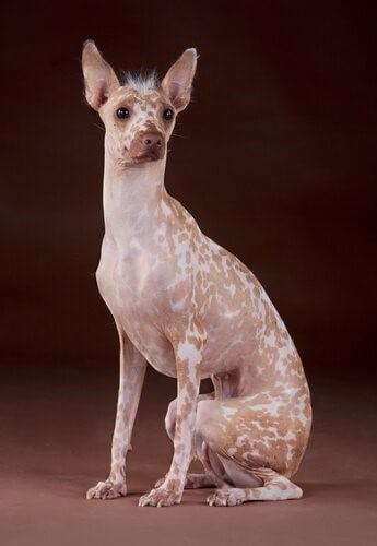 Самые странные породы собак в мире