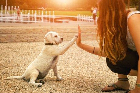 Глухие собаки и шестое чувство