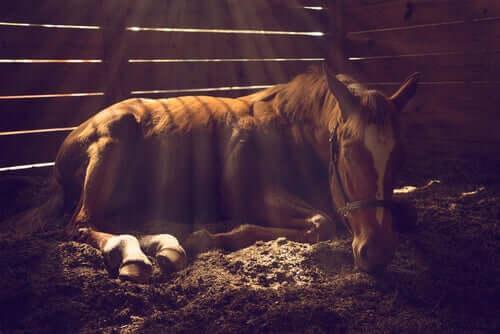 Проблемы с кожей у лошадей: пять советов