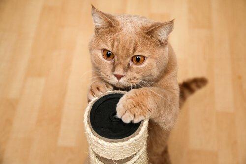 Доска для царапин: почему мне не нравится моя кошка?