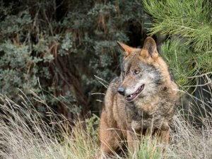 Где можно наблюдать дикую природу в Испании?