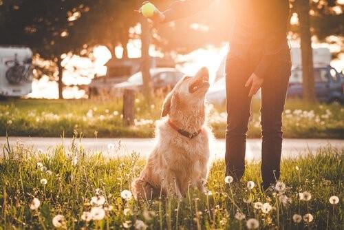8 ошибок, которые мы делаем с нашей собакой в парке