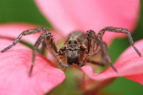 Восемь самых опасных пауков в мире