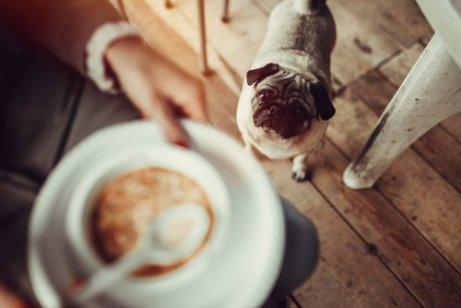 Собака дает суп, интересные факты и рецепты