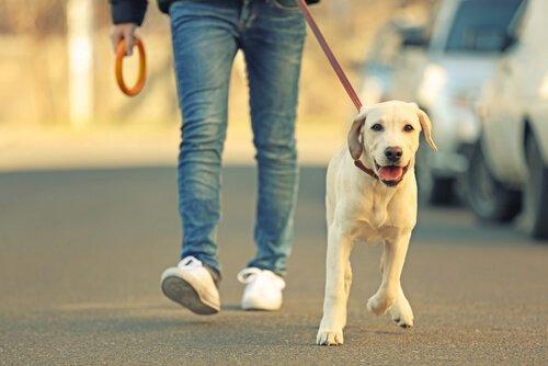 Поводки для собак: 7 различных вариантов