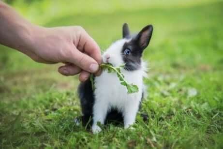 Карликовый кролик: советы по питанию