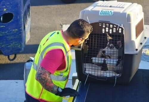 Полет с собакой: подготовка к поездке