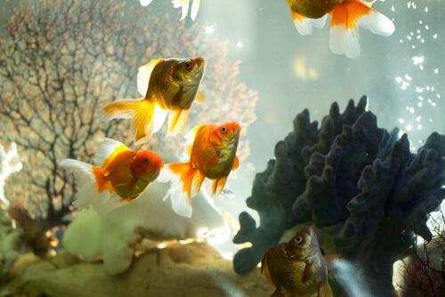 4 различных типа фильтров для аквариумов