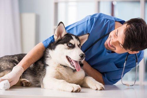 10 советов, чтобы ваша собака не передавала вам болезни