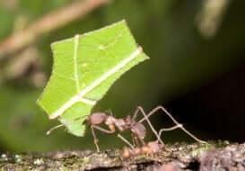 Что едят трудолюбивые муравьи?