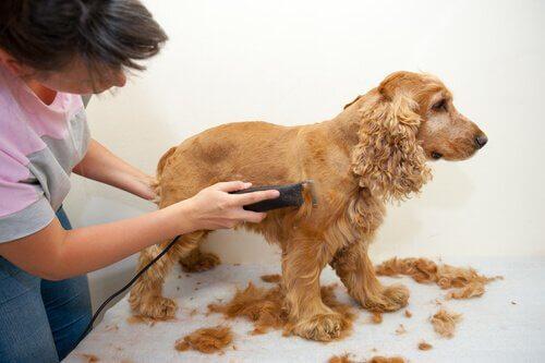 Подготовка к лету для собаки