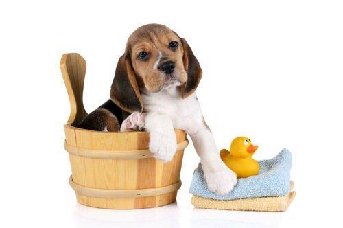 Гигиенические привычки для собаки: воспитание