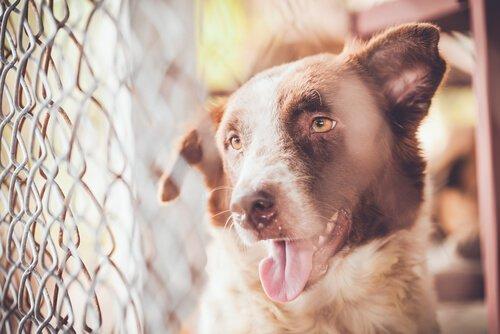 Испания, ворота в незаконную торговлю животными в Европе