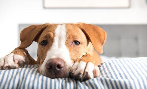 Черви у собак: что я могу сделать?