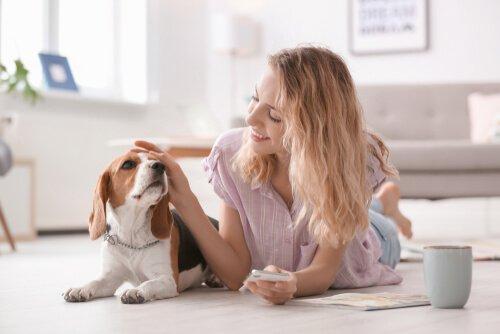 Поглаживание собаки: некоторые советы и советы