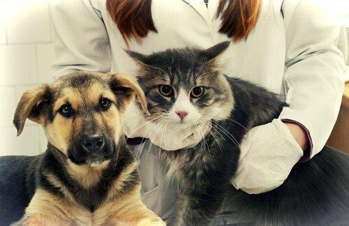 Противовоспалительные средства для собак и кошек