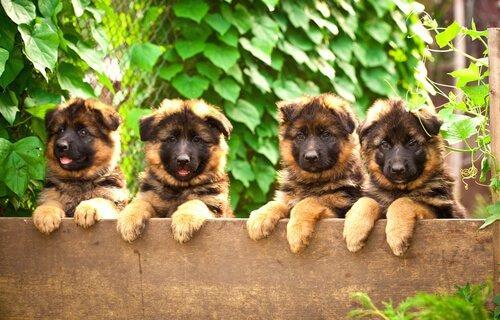Способствует ли покупка собак жестокому обращению с животными?