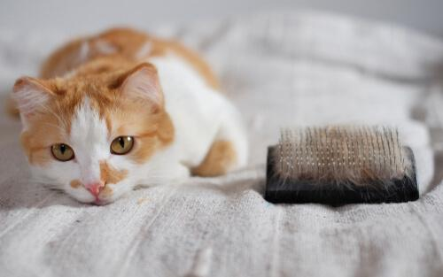 Опасности при смене меха кошек