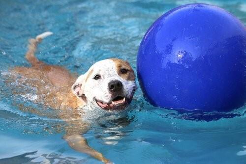 Открылся первый бассейн для собак в Мадриде