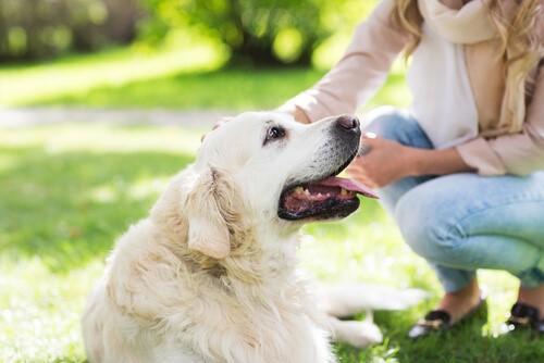 21 удивительные вещи о собаках (часть 1)