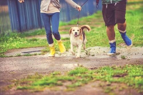 Знаете ли вы, что дождь раздражает слух собаки?