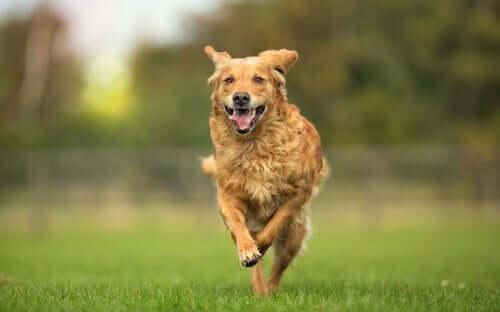 Остеопатия для животных: что это такое?