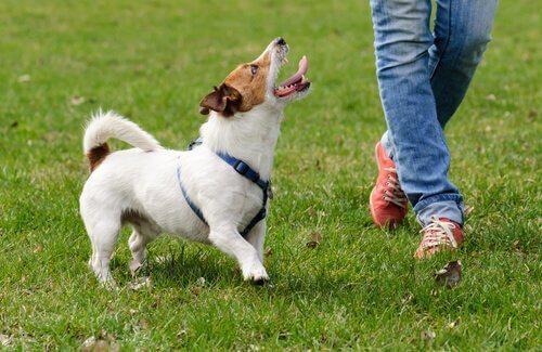 Психология при обучении собак: советы и советы