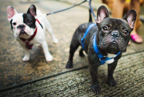 Процедуры для полноценной жизни собаки