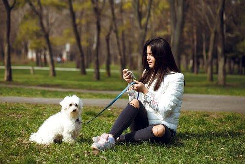 Обучение собак во время прогулки, вот как это сделать