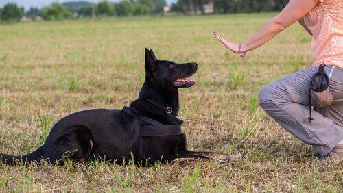 Воспитание собак: почему это важно?
