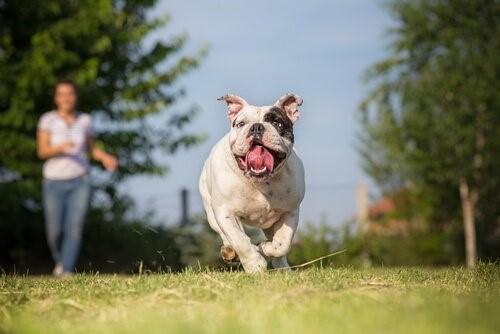 Запрет на собачьи гонки