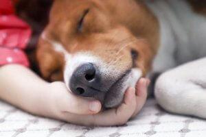 Собачья гусеница / симптомы, лечение и контакт