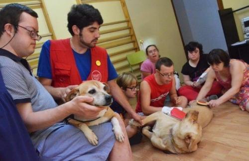 Собака спасает ребенка с синдромом Дауна