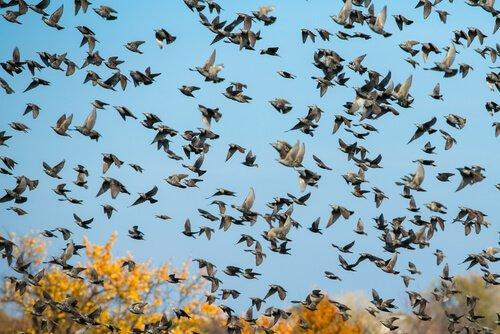 Происхождение птиц и их полет: путешествие во времени