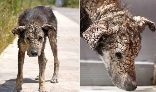 Чесотка у собаки: симптомы и признаки