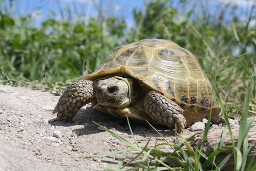 Черепахи как домашние животные: 4 разных типа