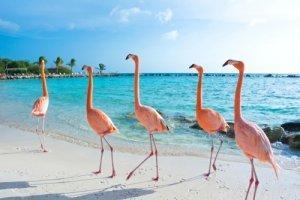 Курьезы о фламинго