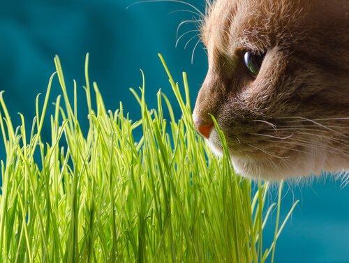 Домашние животные: первая помощь при отравлении