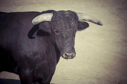 Интересные факты об испанском боевом животном
