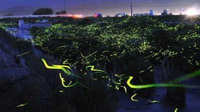 Светлячки или ночные фонарики