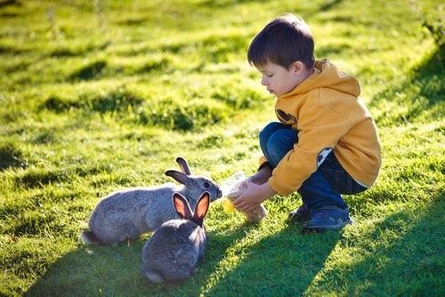 Держа зайца в качестве питомца