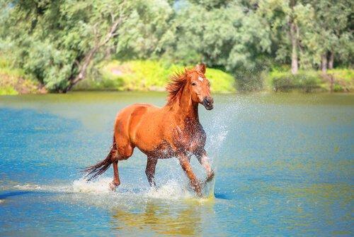 Лошадь в конюшне или в конюшне?
