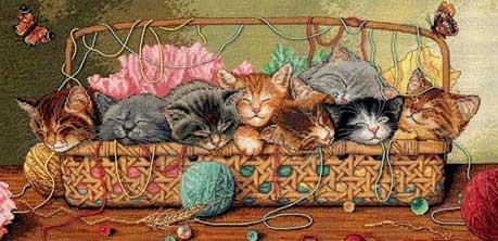 Эти необычайно разные кошки. Кого выбрать?