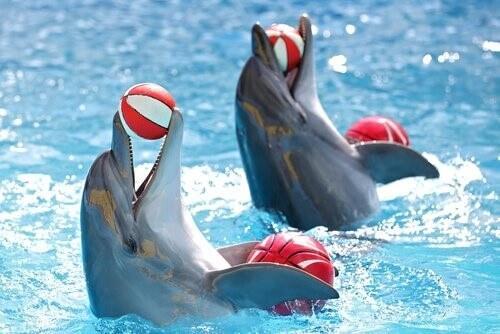 Дельфинарий-Свобода или тюрьма?